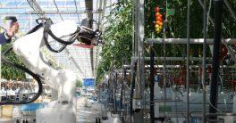 El futuro del sector agrícola está en la robotización de sus cultivos